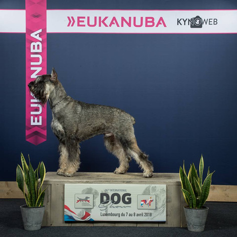 FCL 96e International Dog Show Luxembourg April 2018