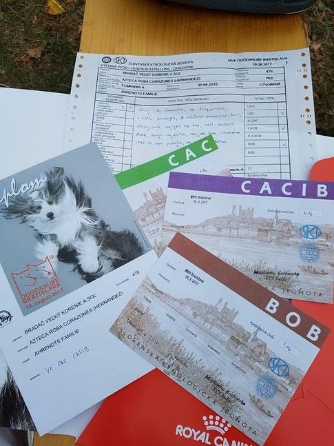 V1, CACIB, CAC, BOB