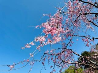 春ですねぇ2021
