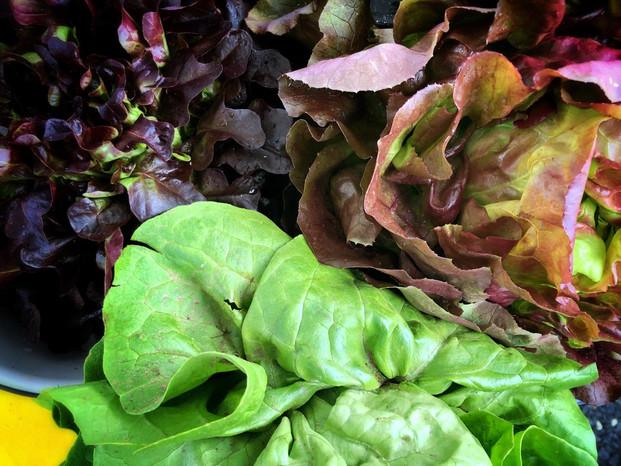 head lettuce img.jpg