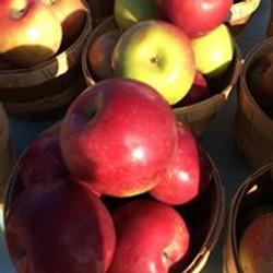 apples hha fb
