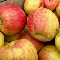 apple img.jpg