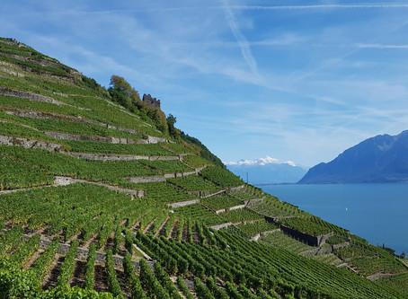 Régions : Lavaux - Canton de Vaud - Suisse