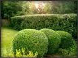 shrub.jpeg
