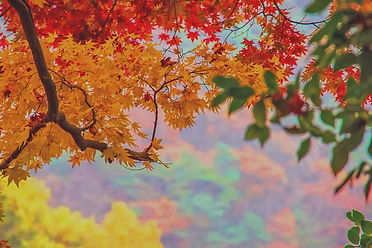 Korea-Fall-Season-Tour-04.jpg