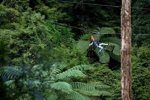 Zipline Mamaku Forest