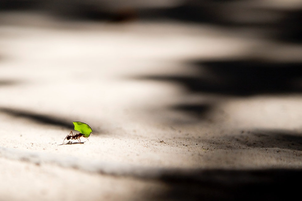 TKF coming soon - ant pic.jpg