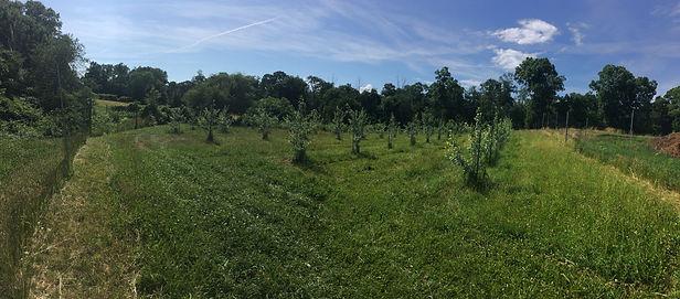 2020_06_24 Orchard Panorama.JPG