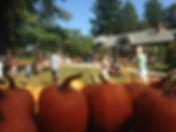 Barn Pumpkins01.JPG