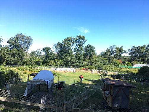 Farmyard 2019.JPG