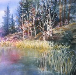 Reeds + Birches 15 x 15  $100