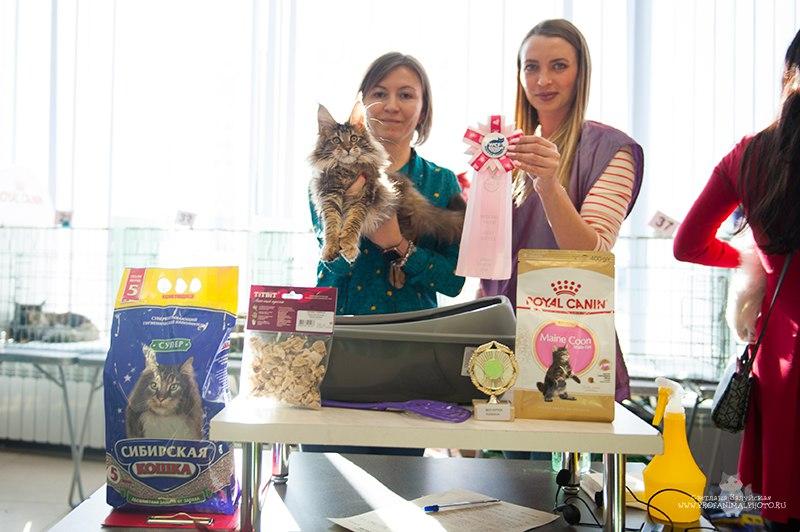 Best kitten in mono breed show
