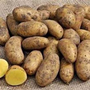 1.5Kg Golden Wonder Potatoes