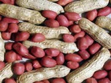 Peanuts (red skin)