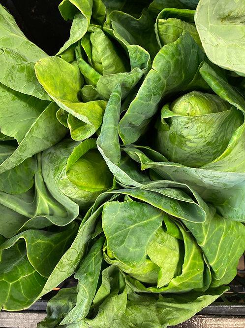 Hispie Cabbage