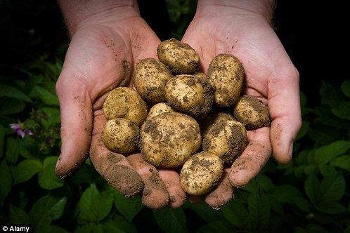 Ayrshire Potatoes kilo