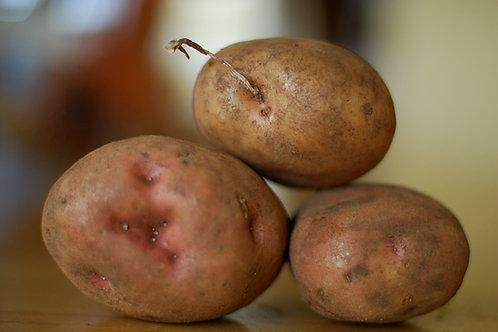 1.5Kg Kerrs Pink Potatoes
