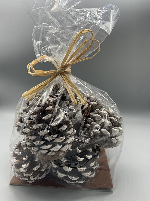 Pine cones with a frosted tip