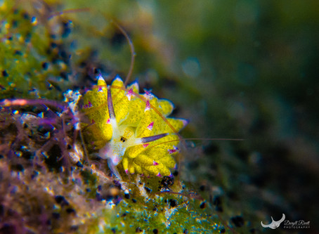 Underwater Photography from Lembeh and Pulau Weh