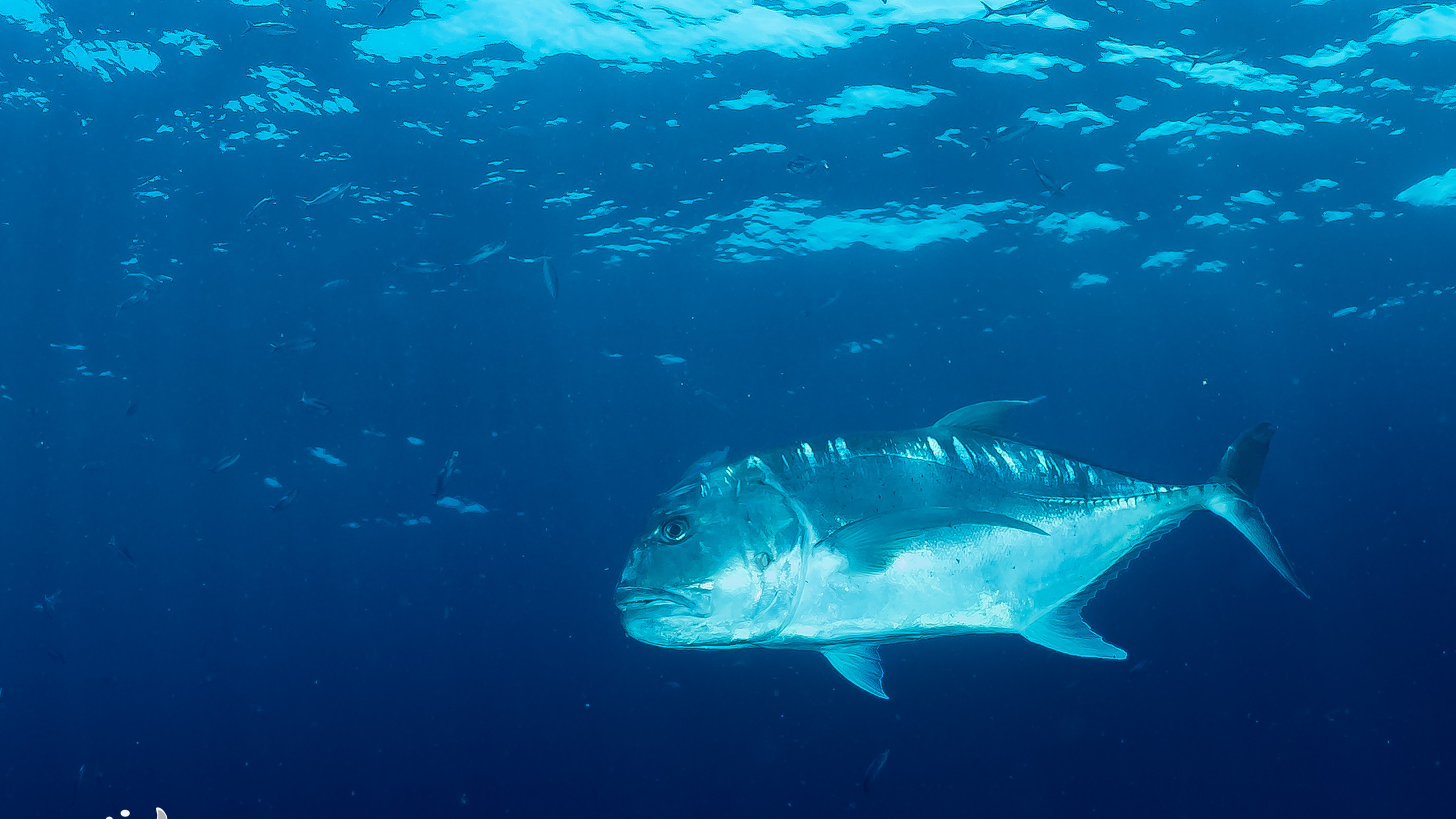 Giant Trevally (GT)
