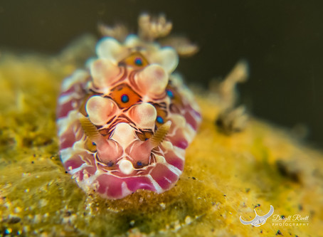 Naked Gastropods 'Nudibranch' weird and wonderful obsession.