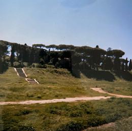 Erba alta al Circo massimo. Roma.