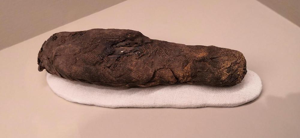Mummia di falco