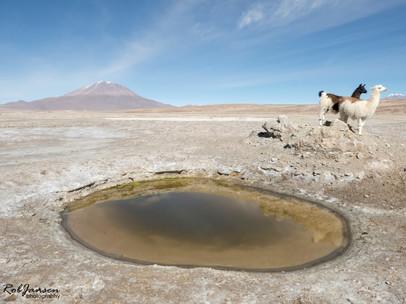 Volcano and Lamas