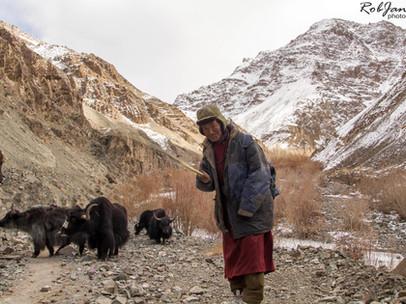 Yak shepherd
