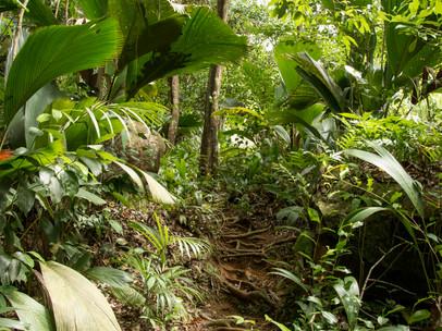 Copolia Trail
