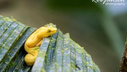 Costa Rica (466)v2 kopie (Large).jpg