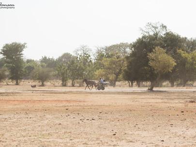 Farafenni to Georgetown, Gambia