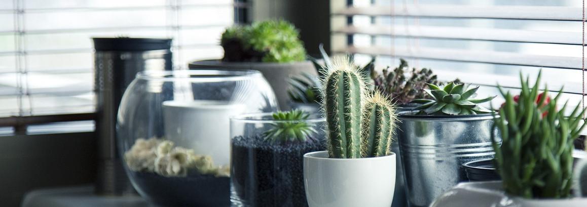 Ces plantes qui purifient l'air