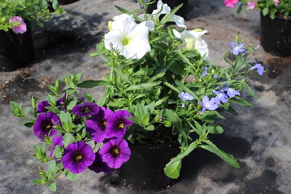 Pot millionbell-surfinia-lobélia blanc/violet/bleu