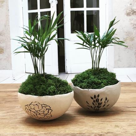 Bols coquilles - compositions végétales