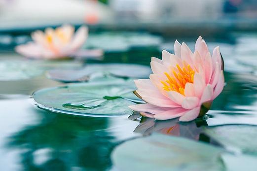 Zen image3.jpg