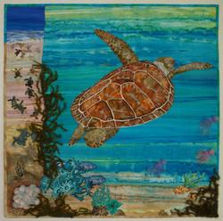 Caretta Caretta Loggerhead Turtle