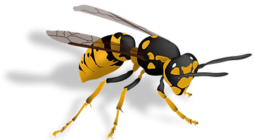 Wasp-PNG-Image-Background.PNG