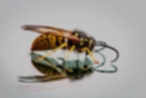 hornets-3213908_960_720 (1).jpg