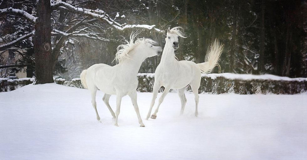 snow-3063835_1920.jpg