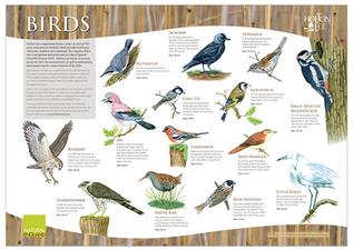 Holton Lee Bird board