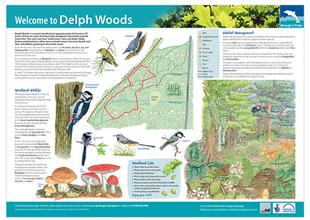 Delph Woods interpretation board