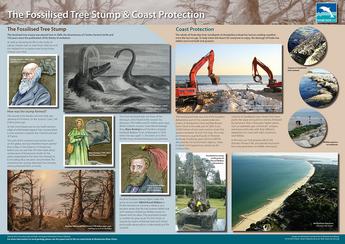 Fossilised Tree Stumps & Coast Protection board