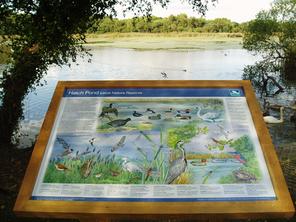 Hatchpond Local Nature Reserve Interpretation Board