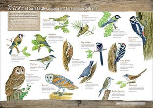 Bird interpreation board