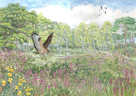 Heathland Habitat