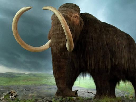 El milagroso mamut mexicano