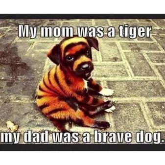 dog tiger