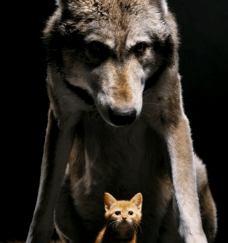 Our inner protector