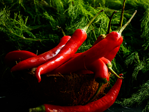 CHILI THE OLDEST MEDICINE